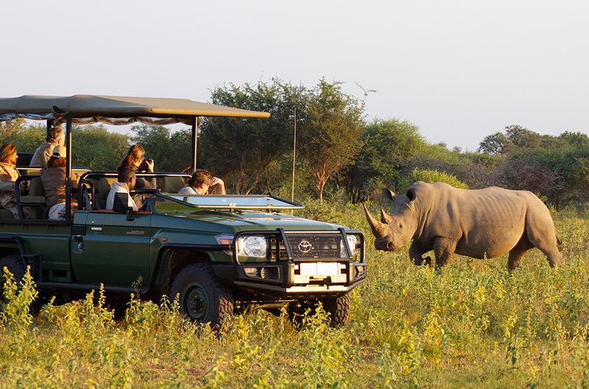 Partir en safari en Afrique : nos conseils pour la location d'une voiture