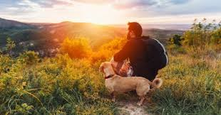 Comment voyager avec son animal de compagnie ?