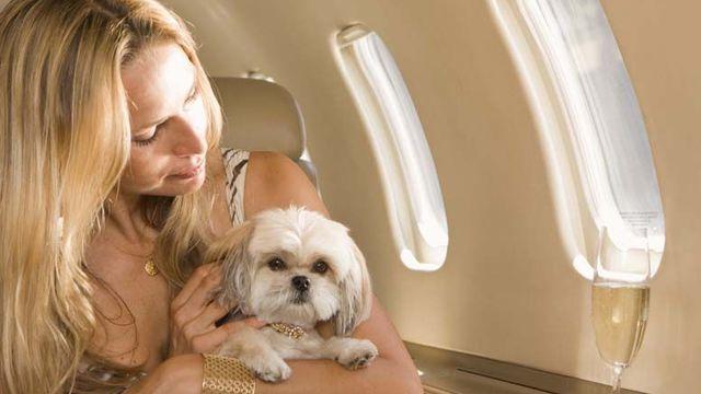 Voyager avec un animal de compagnie dans un avion : comment ça se passé ?