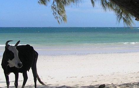 Nosy Be et Sainte-Marie, deux îles incontournables de Madagascar