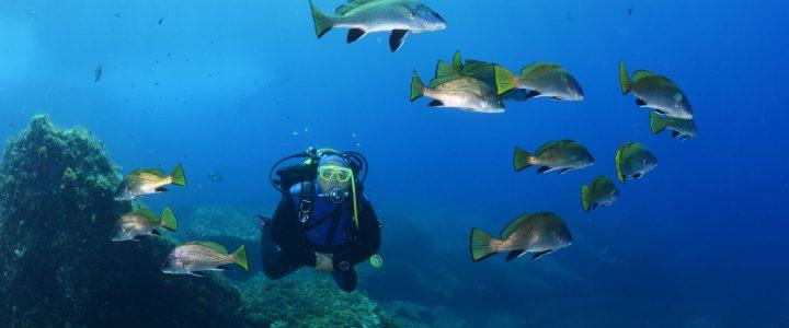 Les 5 plus beaux spots de plongée à Porquerolles