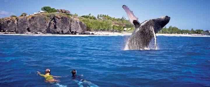 Organiser des vacances inoubliables à La Réunion